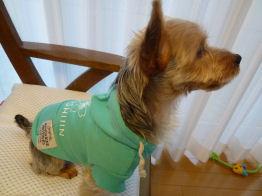名前:ルル 犬種:ヨークシャテリア 体重:3.0kg 購入:スウェットパーカーSサイズ
