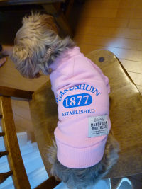 名前:ミミ 犬種:ヨークシャーテリア 体重:3.4kg 購入:トレーナーSサイズ