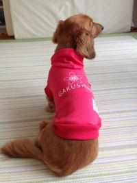 名前:福介 犬種:ミニチュアダックスフンド 体重:5.6kg 購入:スウェットパーカーMサイズ